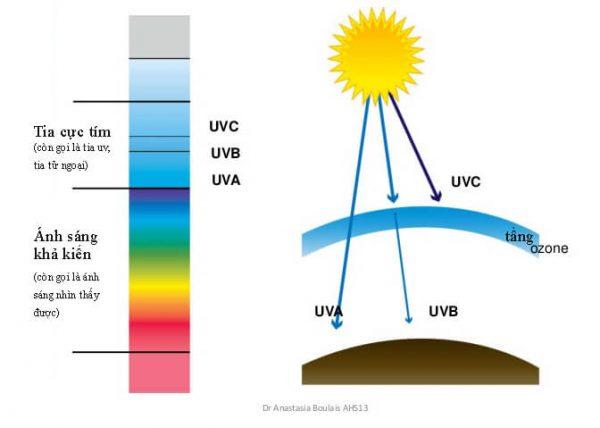 Mô hình hoạt động của tia cực tím( UV)